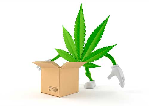 Marijuana Leaf ready to be packed in a box