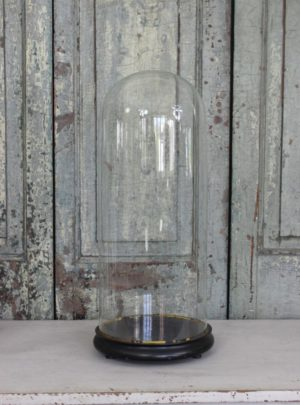 Large beautiful French glass dome from the end of the 19th century.