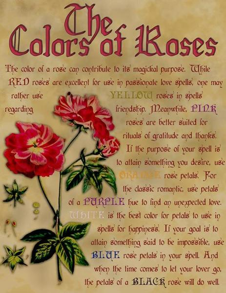 Poems About Roses 6