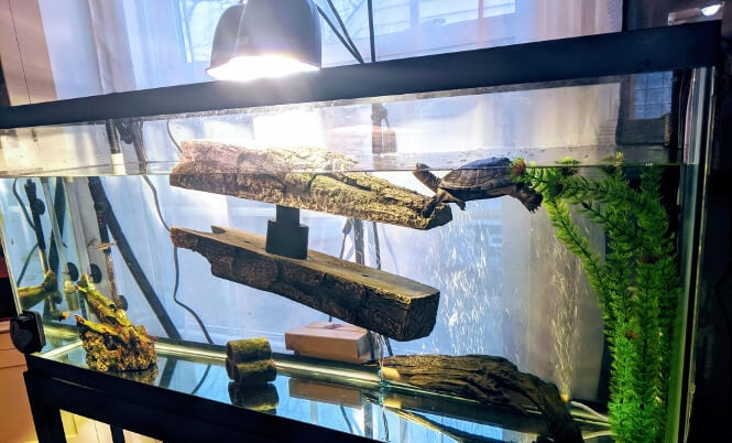 How To Keep A Turtle Tank Hygienic Clean