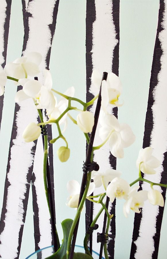 Birches and orchids