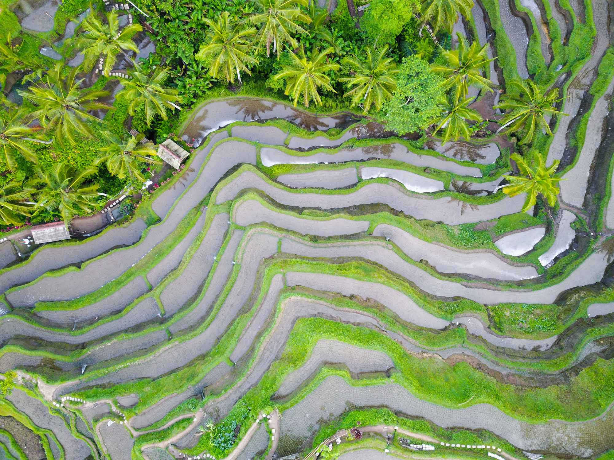 Bali Rice Terraces – The 10 Best Spots On The Island You Need To Visit