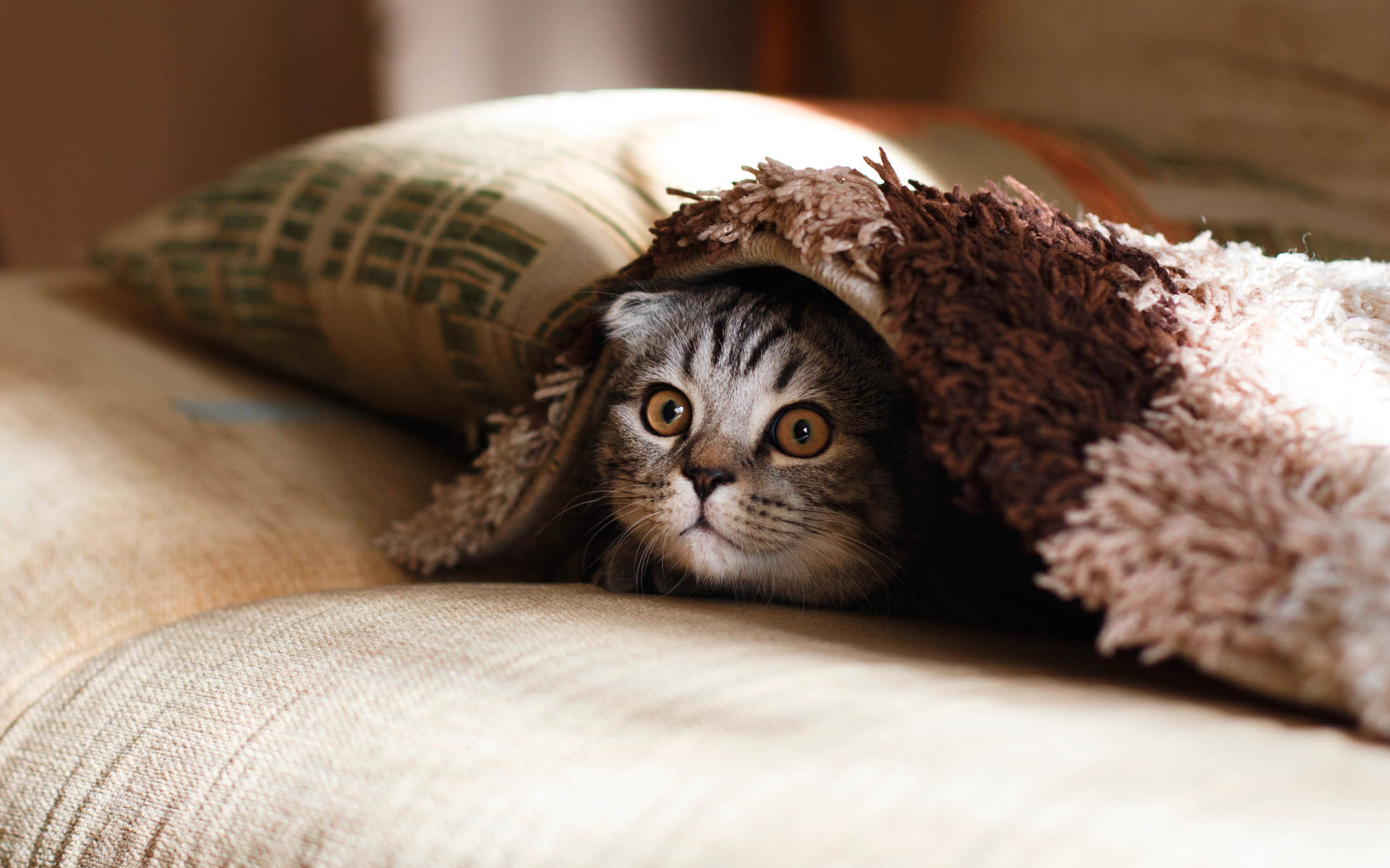 Cat Cafe Tokyo - The 7 Best Places Of The City!
