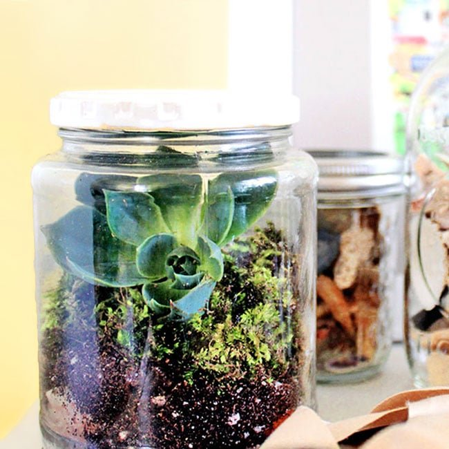 Make a simple and easy DIY mason jar terrarium in 5 minutes! | via barley & birch