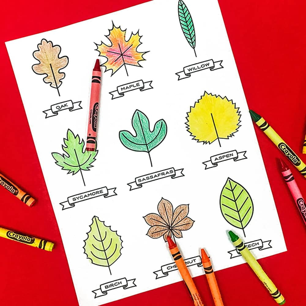 An autumn leaf kids printable with tons of uses! Make a memory game, a leaf art garland, a collector's book and more! | via barley & birch