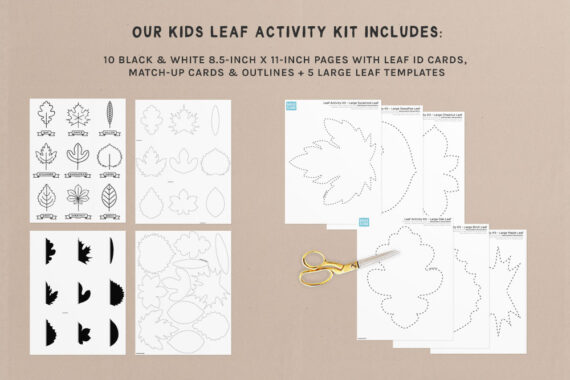 A preview of our printable kids leaf activity kit