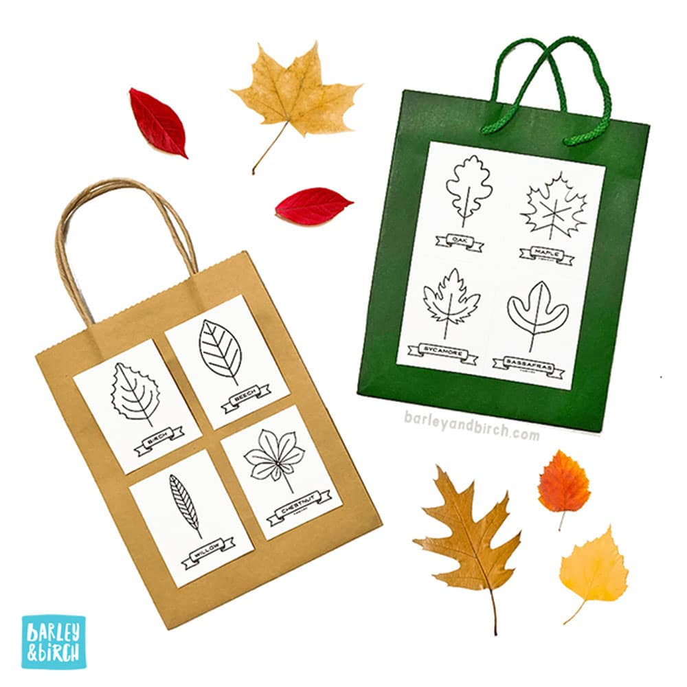 Use our free printable kids leaf activity kit for a fall leaf scavenger hunt! | via barley & birch