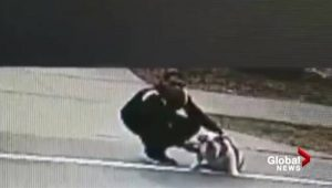 Security camera shows beloved English bulldog 'Arzoo' being taken from outside North Delta home