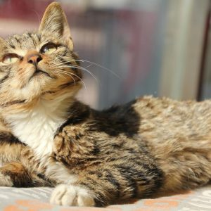 After three years and a lot of hype, U.K.'s 'cat killer' case is solved