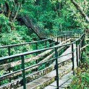 Organization in Kerala Works to Promote Accessibility in Eco-Friendly Destination
