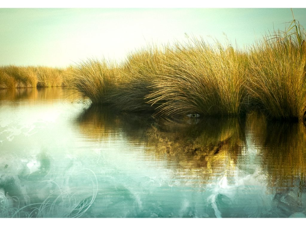 Lion-Grass-Artwork-by-Bowen-Imagery