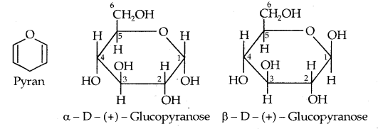 Cyclic Structure of Glucose