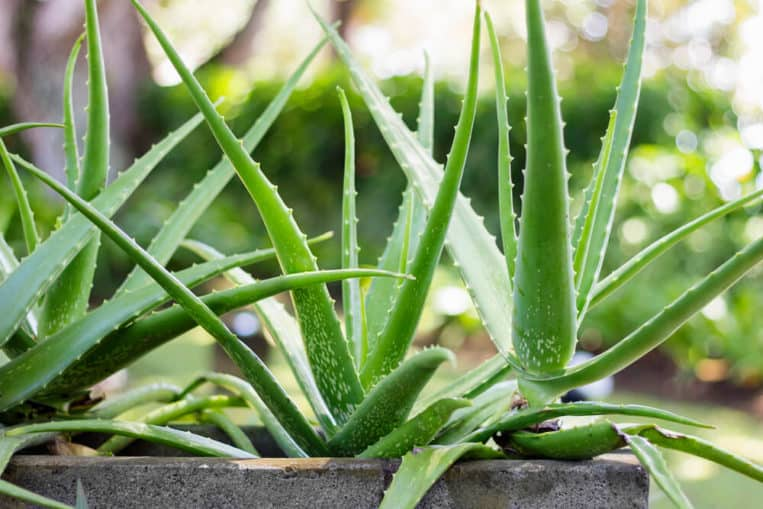 Top 10 Houseplants That Relieves Stress