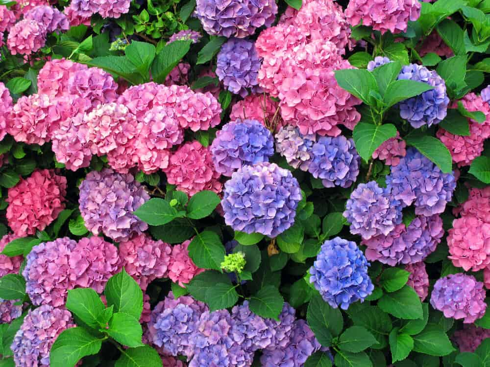 Top 10 Plants for front yard gardening