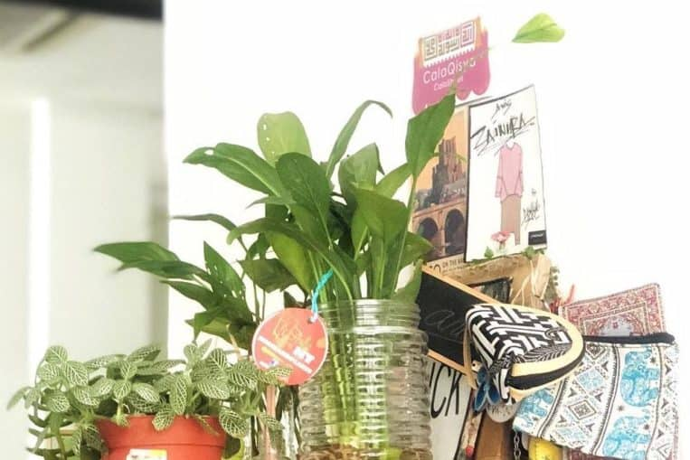 10 Houseplants That Relieves Stress