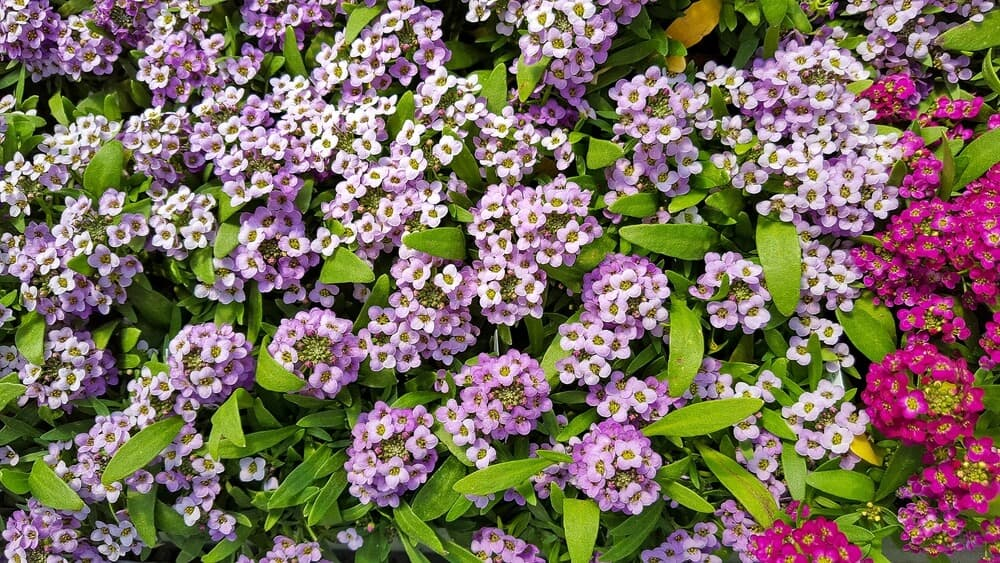 Plants for front yard gardening