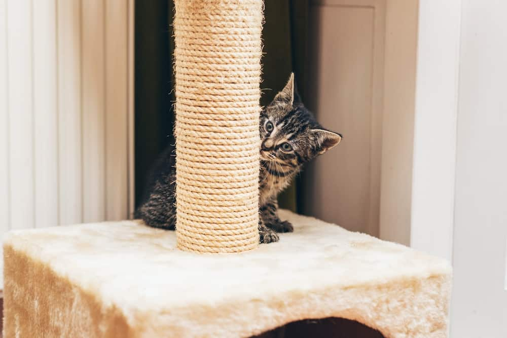 10 Tips to Keep Your Cat Happy Indoors