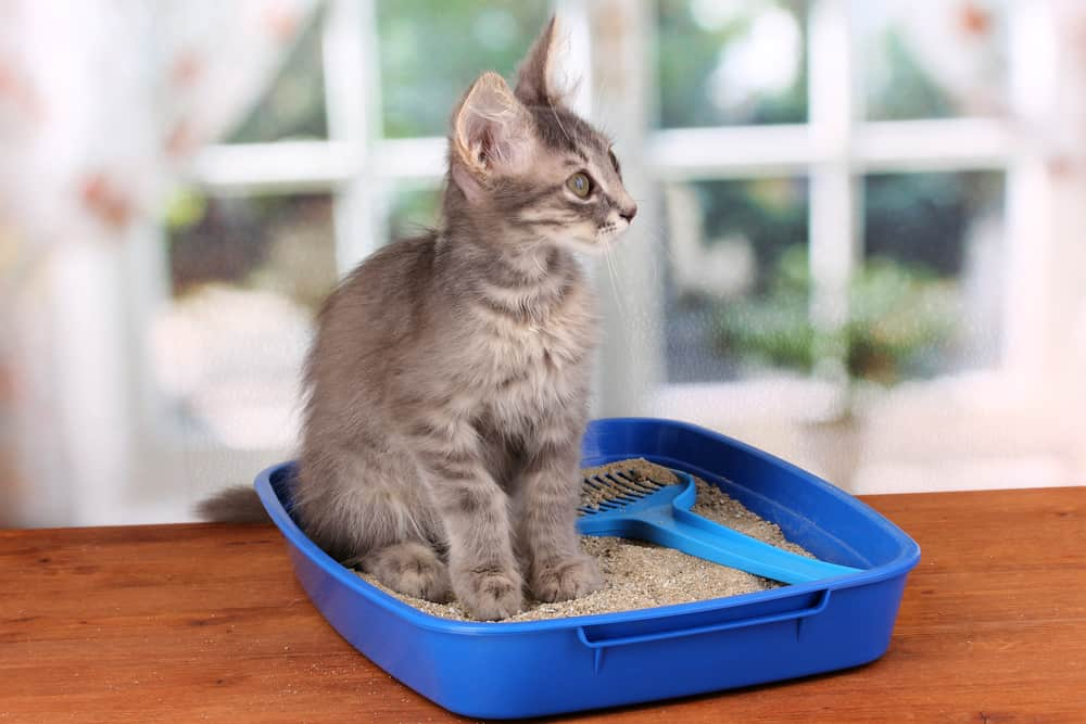 10 signs of a healthy cat