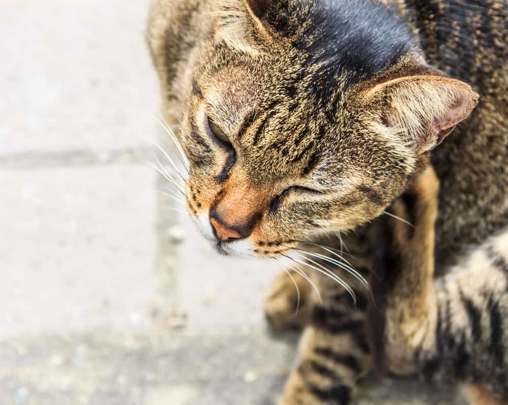 How to keep your cat healthy and live long