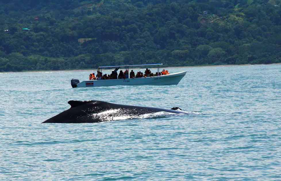 Dominical whale watching