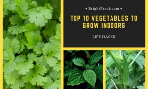 Top 10 Vegetables to Grow Indoors