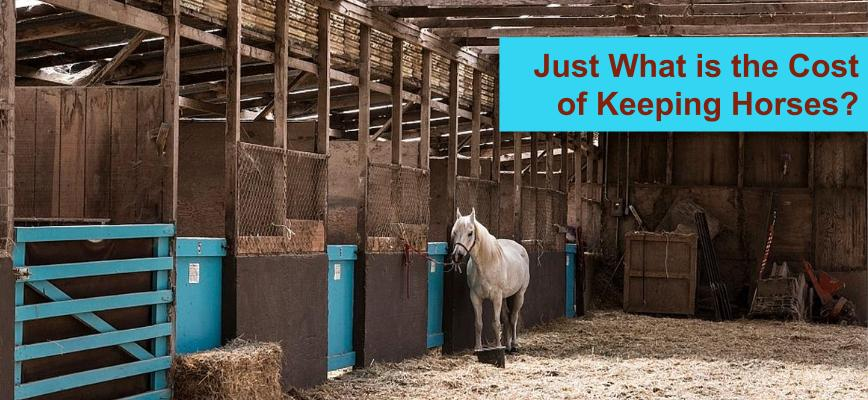 Annual cost of keeping horses