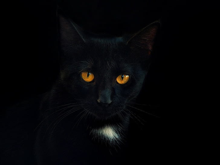 Background Black Wallpaper Cat Pictures