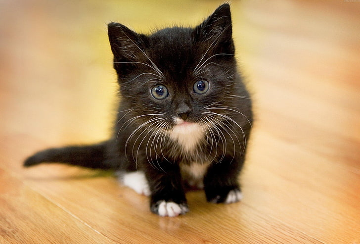 Fluffy Wallpaper Black Kittens