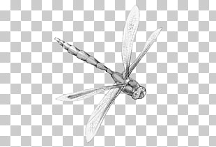 Dragon Fly Poems 7