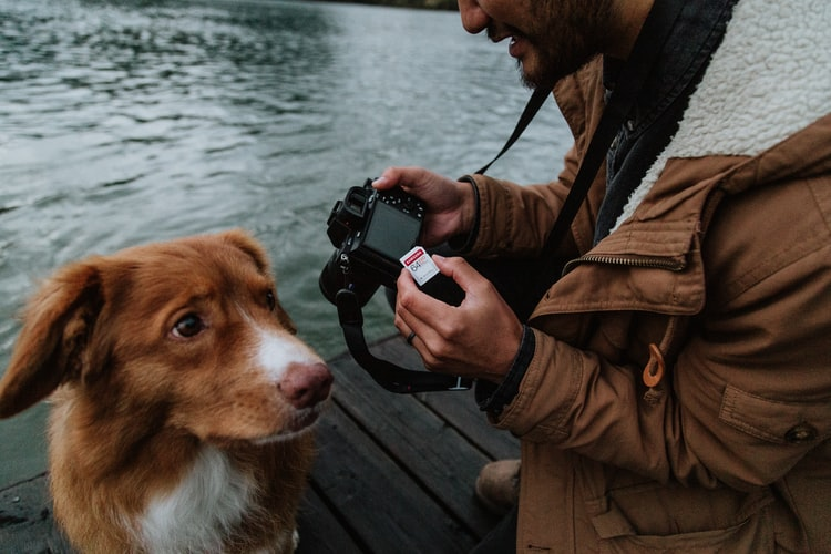 Keep a picture of your dog