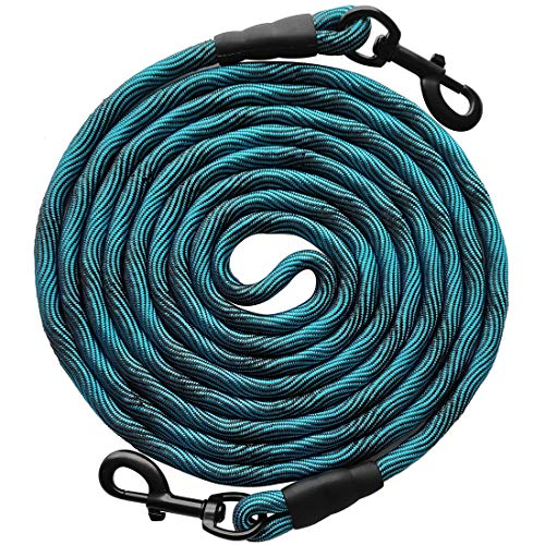 Dog Leash While Camping