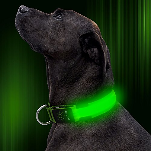 LED Dog Collar For Camping