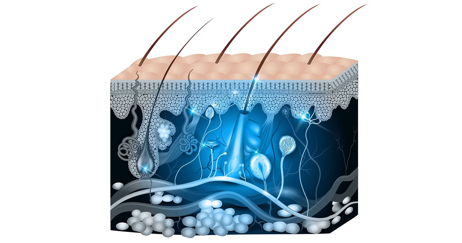 Due to the complex skin structure, your skin does not absorb everything you apply to it.