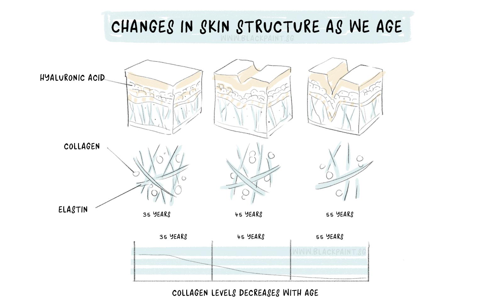 illustration of our skin changes as we age, where elasticity is reduced due to decrease in collagen content.
