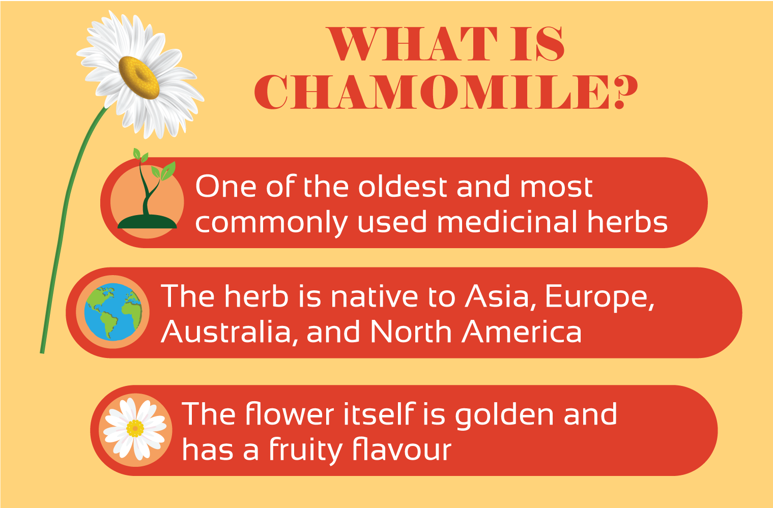 illustration of what is chamomile