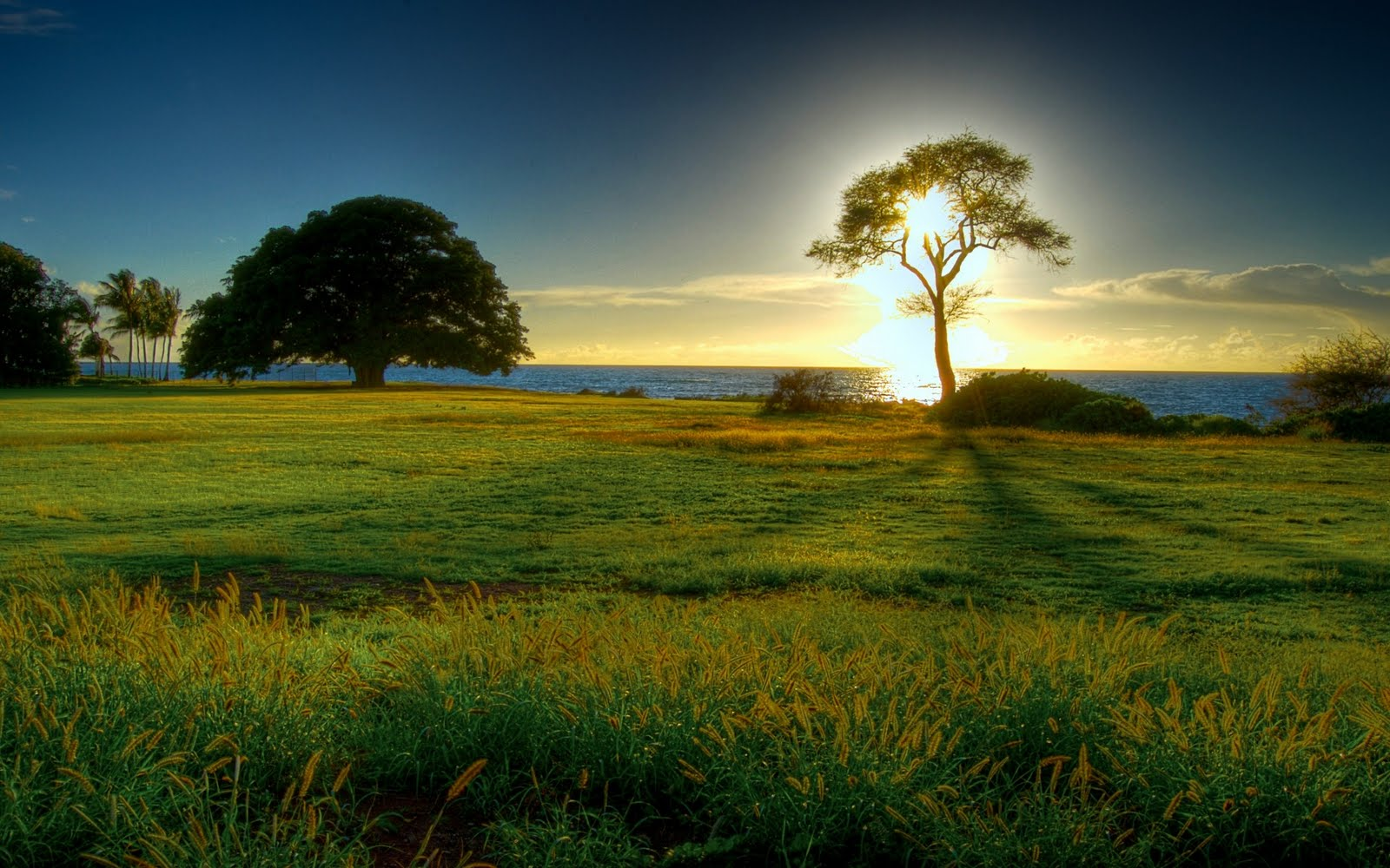 Photography Nature Beautiful Images Wallpaper Background Cool Photos