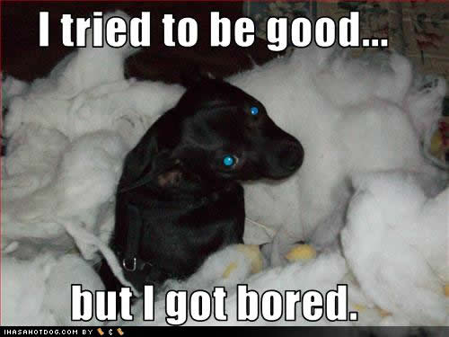 Funny Dog Quotes And Sayings Quotesgram