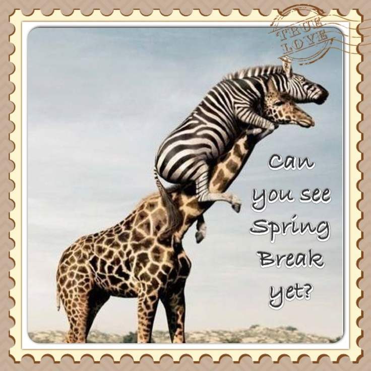 Ready For Spring Quotes Funny Quotesgram