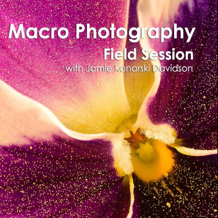 Caption For Flower Photography 3