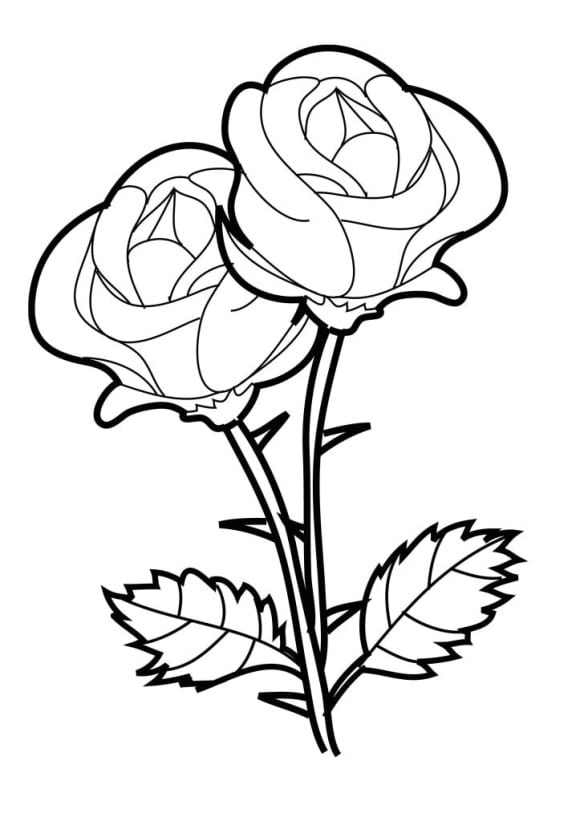Coloring Page Roses Full