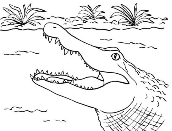 cool alligator coloring page free