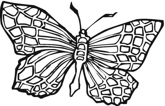 elegant butterfly coloring pages for adults 1