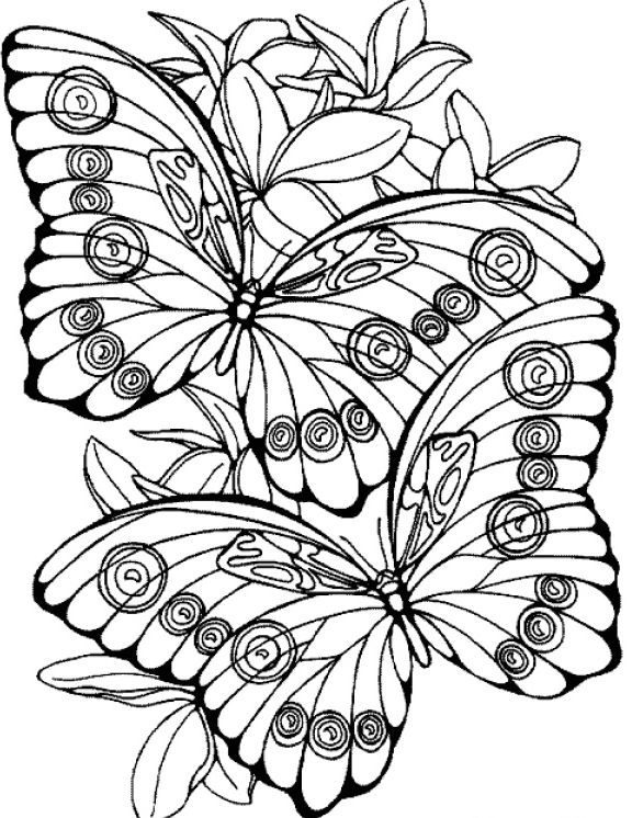 elegant butterfly coloring pages for adults