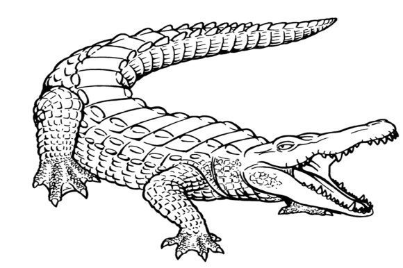 inspirational alligator coloring page free