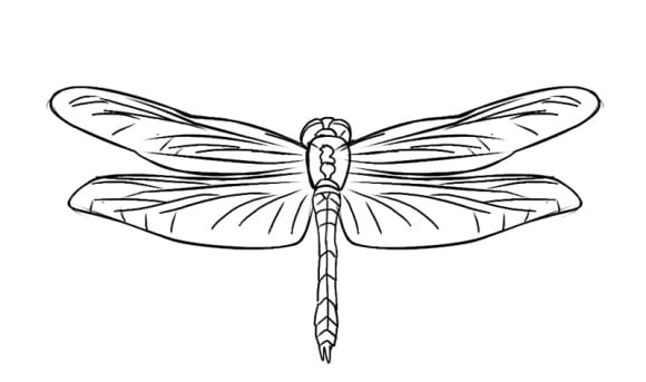 inspirational dragonfly coloring page 1