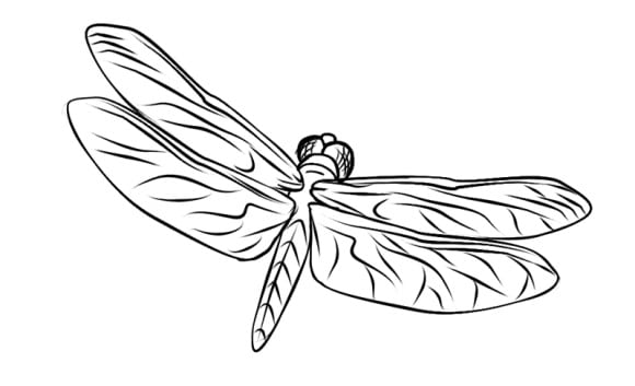 unique dragonfly coloring page 1