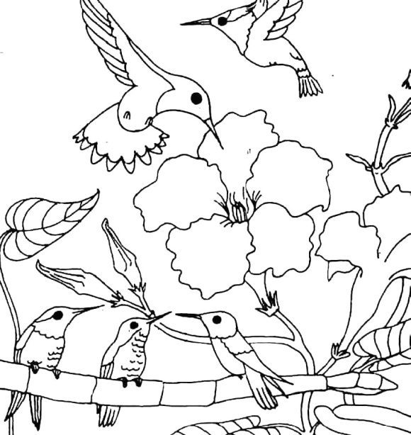 awesome coloring page hummingbird printable