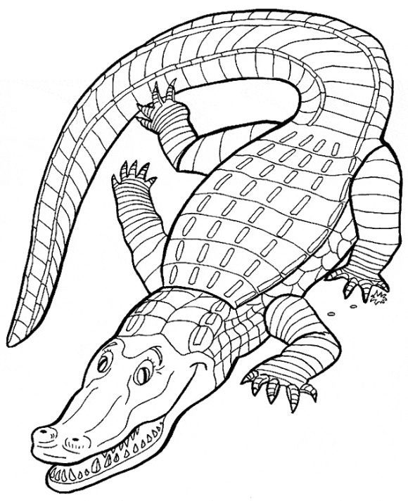 awesome crocodile coloring page 1