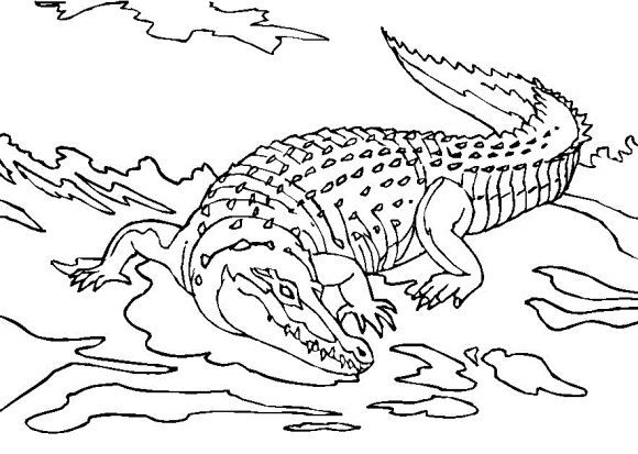 awesome crocodile coloring page 2