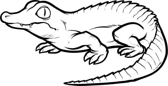 awesome crocodile coloring page